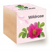 EcoCube Wildrose